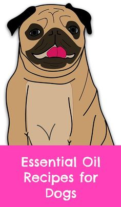We've successfully used essential oils on our own dog to clear up ear irritation and to help a hot spot. Essential oils can also be used instead of toxic chemicals, found in commercial flea products.