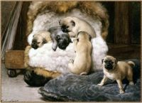 antique european paintings from the 1800s that shows the true exsistense of the silver/grey pug