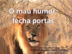 Mau Humor, Animals, Friends, Quotes, Uplifting Messages, Words, Frases, Quotations, Amigos