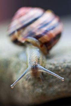 portrait of a snail.