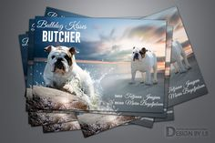 Advertisements for dog breeders, kennels and other business. Quality adverts design for print and online magazines,Professional Web page Graphic Design. Advert Design, Web Design Services, Cattery, Presentation, Graphic Design, Animals, Animales, Animaux, Animal