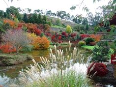 Emu Valley Rhododendron Garden, Burnie is home to platypus, echidna and a variety of birds. Photo provided by the organisation to www.think-tasmania.com