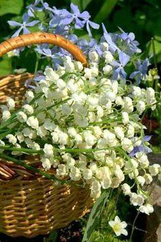 The Fatal Gift of Beauty Spring Flower Arrangements, Spring Flowers, Wild Flowers, Floral Arrangements, Flower Images, Flower Art, Lily Of The Valley Flowers, Happy Birthday Flower, Love Garden