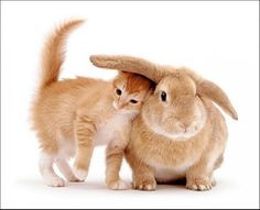 Cat and bunny. Cheers, big ears!