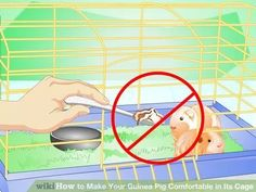 Image titled Make Your Guinea Pig Comfortable in Its Cage Step 11