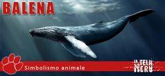 Simboli animali: il significato della Balena