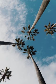 Palm tree, wallpaper, hd wallpapers and summer wallpapers HD photo by Wil Stewart ( on Unsplash Collage Mural, Photo Wall Collage, Picture Wall, Photo Collages, Image Tumblr, Photos Tumblr, Hd Photos, Free Photos, Stock Photos