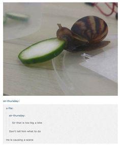 Funny Animal Memes of Day to Make You Smile - 23