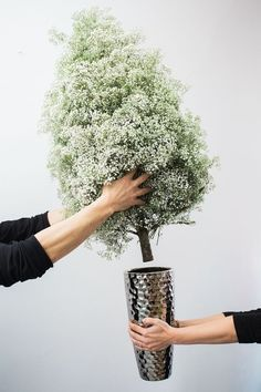 diy pine tree + baby's breath arrangement // the stripe