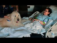 Friendly paws visit Ronald Reagan UCLA Medical Center patients