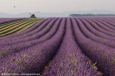 Lavender Color, Adventure Awaits, Paris France, Vineyard, Trail, Outdoor, Travel Ideas, Bucket, Blog