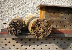 hotel a insecte Nichoir à osmies abeilles solitaire