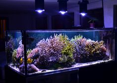 Adee's sunlit Reef #Aquarium now supplemented with three 100 watt Orphek DIF100XP LEDs. Nice!