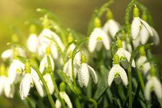 Co kwitnie wiosną? | Inspirowani Naturą I see the most beautiful spring flowers