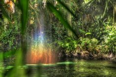 A rainbow appears in the rivers of Adventureland. Photo by Kevin Crone 'disney #imagineering