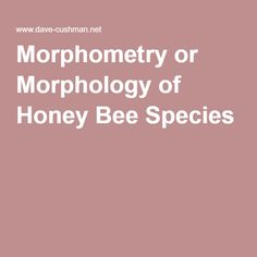 Morphometric Measurements For The Distinguishing And Identification Of  Honey Bee Species And The Purity Of Their Mating.