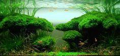 """Aquatic Eden: Aquascape of the Week: Renee So's """"Morning Glory"""" - Aquascaping Aquarium Blog"""