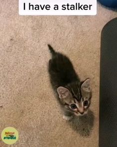 Baby Animals Super Cute, Cute Baby Cats, Cute Little Animals, Cute Cats And Kittens, Kittens Cutest, Cute Babies, Baby Animals Pictures, Cute Animal Photos, Cute Animal Videos