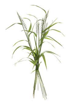 bottlebrush grass bouquet (mary jo hoffman)