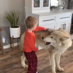 Animals Discover Animal world - animales - Babycan Funny Animal Videos Cute Funny Animals Funny Animal Pictures Cute Baby Animals Animal Memes Funny Dogs Animals And Pets Wild Animals Videos Funny Humor