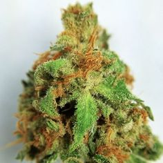 Buy Cannabis Oil Online order at :realweedshop.com EFFECTIVE IN THE TREATMENT OF :• Cancer(All Types) •Arthritis• .Leukemia Diabetes • Osteoporosis •Crohn's Disease •Insomnia • Migraines •Depression • Multiple Sclerosis •Psoriasis • Glaucoma •Chronic pain •Asthma •Burns •Stops