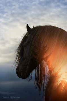 Horse photography romantic and beautifully layered and blended with sunset sky and evergreens.