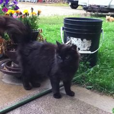My cat beyounce
