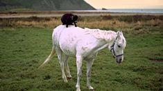 Goat on a Horse, Newfoundland and Labrador (+playlist)