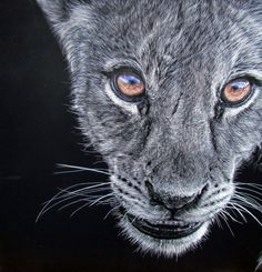 Lesley Barrett, scratchboard art...breathtaking website!