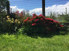 Plants, Gardens, Small City Garden, Plant, Planets