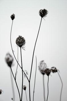 Photograph dry beauty by Marysia Ratajczak on 500px