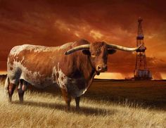 ONLY IN TEXAS!! ★