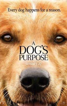Can Dostum, Bir Köpeğin Amacı, A Dog's Purpose - http://www.omurokur.com/2017/05/can-dostum-bir-kopegin-amaci-a-dogs-purpose/