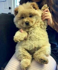 Looks like a teddy bear ❣️