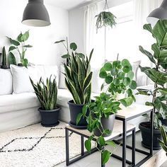 snake plant sansevieria pilea peperomioides plant stand big plants plant display green foliage plants leaves plants at home living with plants air purifying house plants houseplants indoor plants plan Living Room Plants, Bedroom Plants, Garden Living, Home Living, My Living Room, Big Plants, Indoor Plants, Potted Plants, Rustic Chic Decor