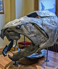 Dunkleosteusis anextinctgenusofarthrodireplacodermfishthat existed during theLate Devonianperiod, about 360–380million years ago. Some of the species, such asD. terrelli,D. marsaisi, andD. magnificus, are among the largest arthrodire placoderms ever to have lived.  The largest species,D. terrelli, measuring up to 6m (20ft) long and 1t (1.1 short tons) in weight,was ahypercarnivorousapex predator