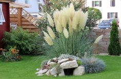pampas grass- Pampasgras I am always impressed how quickly the plants develop. Back Gardens, Outdoor Gardens, Diy Jardim, Landscape Design, Garden Design, Patio Plants, Pampas Grass, Front Yard Landscaping, Farmhouse Landscaping