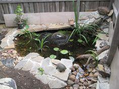 Les 149 meilleures images de bassins de jardin en 2018 - Bassin tortue floride strasbourg ...