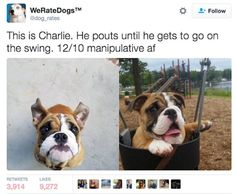 Twitter Account We Rate Dogs Is Hilarious AF (25 pics)
