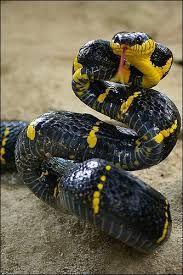 famille des serpents - Recherche Google