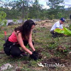 TerraMIca volunteers planting #coffee #seedlings at a children's home in #Honduras to improve #sustainability. Impacting lives! #treeteam