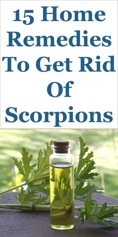 15 Quality Home Remedies To Get Rid Of Scorpions: This Guide Shares Insights On The Following; Does Lavender Keep Scorpions Away, Why Do Scorpions Like Beds, Scorpion Proof Bed, Where Do Scorpions Nest, What Attracts Scorpions, Baby Scorpions In House, Cinnamon And Scorpions, Can Scorpions Climb, Etc.