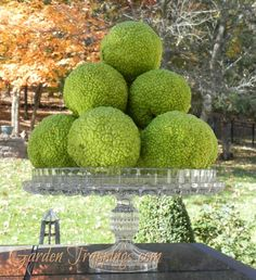Osage oranges or hedge apples--DIY drying technique to use as decor. They are the green I have in my kitchen that is so hard to find!
