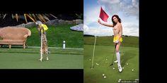 Do you like golf?