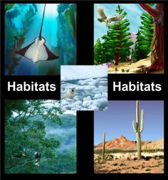 Intro to Habitats - An introduction to various habitats along with the plants and animals that inhabit them Resource type: SMART Notebook lesson Subject: Science Grade: Grade 1 Grade 2 Grade 3 Grade 4 Primary Science, Kindergarten Science, Elementary Science, Science Classroom, Teaching Science, Science For Kids, Preschool, Science Resources, Science Lessons