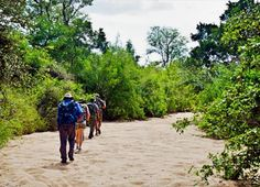 A Walk in the Lonely Wild | Nightjar Travel    Kate Collins learns about the brand new Lonely Bull Backpack Trail in the Kruger National Park.  #travel #hike #walk #backpack #adventure #kruger #southafrica #KateCollins #Wildmagazine