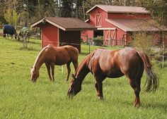 [PODCAST] Learn how you can adopt eco-friendly horse and farm management techniques that can often save you some green, increase efficiency, and provide a healthier environment for your horses, as well. Brought to you by TheHorse.com