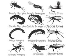 Fly Fishing Entomology - flies-by-stage-diagram-1