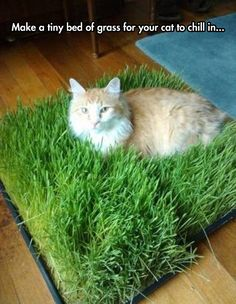 Tiny bed of grass....Brilliant!!