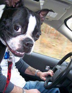 Sharply - Criatividade em Ação | Série hilária de pets que gostam de aparecer
